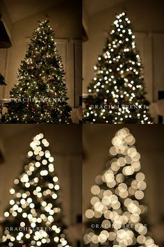 Taking pics of your tree