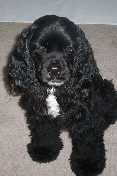 looks like sammy, I want a puppy