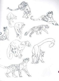 Tigertooth and Mountainpeak