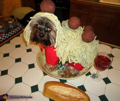 Spaghetti and Meatballs dog costume. Just need yarn for the spaghetti and meatballs, than put some red fabric on the legs.  #halloween #diy #costume