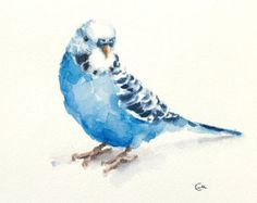 Watercolor Robin Original Bird Illustration 7 4/5 x 7 4/5