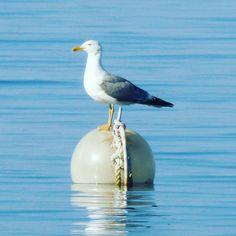 "Gefällt 22 Mal, 1 Kommentare -   sew lover  (@indyvidualcrafts) auf Instagram: ""#pakostane #kroatien #croatia #möwe #gull #seagull #urlaub #holiday"" Bird, Instagram Posts, Pictures, Painting, Croatia, Vacation, Photos, Birds, Painting Art"