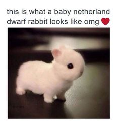 ARE YOU EVEN REAL? OMG STOP. Keep clicking on bunny to get a whole line of adorable animals. I'm a BIG animal lover.💗like this if u r an animal lover too💞 Super Cute Animals, Cute Little Animals, Cute Funny Animals, Baby Bunnies, Cute Bunny, Tiny Bunny, Easter Bunny, Cutest Bunnies, Bunny Rabbits