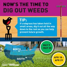 Tip: If crabgrass has taken hold in small areas, dig it out all the way down to the root so you can help prevent future growth. #TimeToSpring