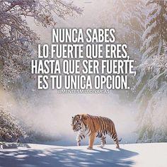 Visita www.alcanzatussuenos.com/como-encontrar-ideas-de-negocios-rentables #pensamientospositivos #optimista #reflexionar #creeenti #leydeatraccion