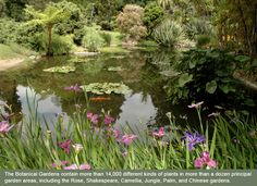 The Huntington Library & Botanical Gardens: Some of the most beautiful gardens in Los Angeles.