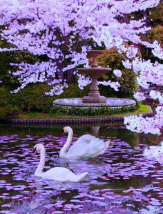 This picture, named Spring Garden, was created by for the spring landscape photoshop contest. Beautiful Birds, Beautiful World, Beautiful Gardens, Beautiful Places, Beautiful Pictures, Beautiful Swan, Beautiful Scenery, Simply Beautiful, Amazing Photos