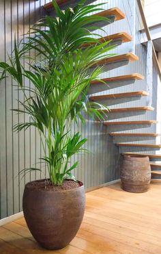 Croco design planter met Howea forsteriana. In het kantoor van Wijkontwikkelingsmaatschappij Vathorst te Amersfoort.