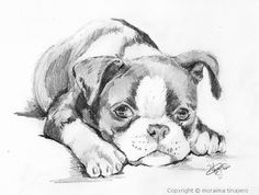 boston terrier puppy sketch by moraima tinajero on ARTwanted Cute Puppy Breeds, Best Dog Breeds, Cute Puppies, Boston Terrier Art, Boston Terrior, Pencil Drawings Of Animals, Boston Art, American Dog, Animal Tattoos