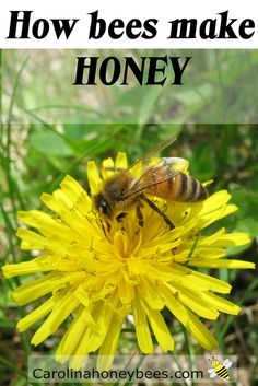 Have you every wondered how bees make honey? The process of transforming nectar…