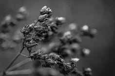 Cyclic - Former flowers.