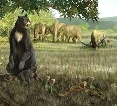 What did kill off the megafauna? Prehistoric Wildlife, Prehistoric World, Prehistoric Creatures, Wildlife Art, Reptiles, Mammals, Short Faced Bear, The Ancient One, Extinct Animals