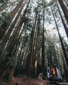 I'd love to go on an adventure and visit trees like this. The campervan life looks amazing, I could even take my dog! #vanlife
