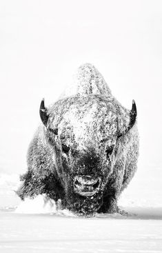 Enduring Spirit, Derek Jerrell Behold The Most Incredible Photos Of The National Geographic Photo Contest Of 2018 artFido Photographie National Geographic, National Geographic Photography, Wildlife Photography, Animal Photography, National Geographic Photo Contest, National Geographic Animals, National Geographic Wallpaper, Beautiful Creatures, Animals Beautiful