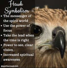 Hawk spirit animals belong to the realm of bird medicine. It carries the symbolism that comes with the ability to fly and reach the skies. Read more with the article linked A selection of bird photos Hawk Spirit Animal, Spirit Animal Totem, Animal Spirit Guides, Your Spirit Animal, Animal Totems, Animal Symbolism, Power Of Vision, Spirituality, Animaux