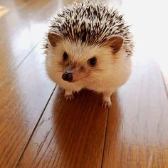Adorable Hedgehog Continues to Melt Hearts With Playful Photos - BlazePress