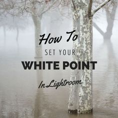 How To Set A White Point In Lightroom | CaptureYour365
