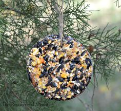 Homemade bird seed ornaments using shortening or lard. These make great Christmas gifts. Kids will love helping out with these.