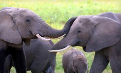 Kenyan Safari with Airfare from Classic Escapes Deal of the Day   Groupon Washington DC