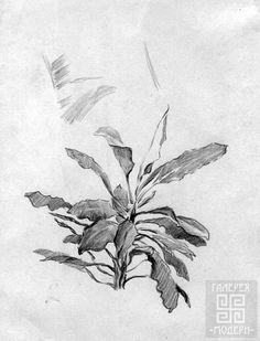 наброски растений карандашом: 15 тыс изображений найдено в Яндекс.Картинках