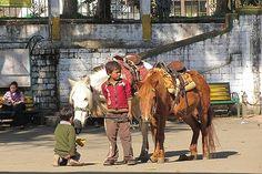 Pony Rides anyone?