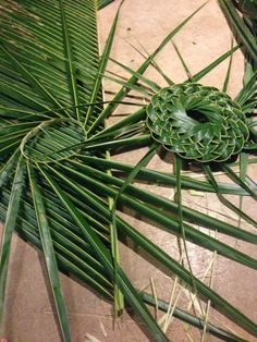 Palm frond hat making session for a friend Flax Weaving, Willow Weaving, Weaving Art, Basket Weaving, Hand Weaving, Leaf Crafts, Flower Crafts, Flower Art, Palm Frond Art