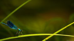 Dream In Blue...