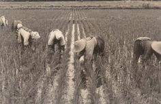 農業科学博物館・第31回企画展「稲づくり作業と農機具」
