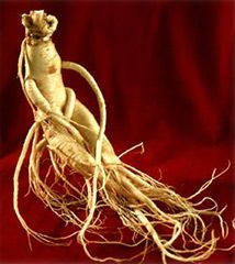 Ginseng is a plant native to northeastern Asia, known for its pharmaceutical properties. Korean ginseng is the most famous arround the world. THE BENEFITS OF GINSENG Power Trip, Diabetes, Korean Red Ginseng, Creatinine Levels, Anti Aging, Boost Immune System, Pelo Natural, Kidney Disease, Amor