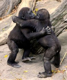 Relájate y disfruta de las mejores instantáneas de animales abrazándose de la manera más tierna posible. No querrás que se acaben.