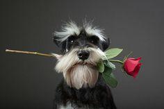 Sassy loves flowers from her beaus.