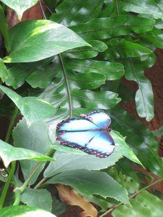 Cynicism And Butterflies: Meijer Gardens: Butterflies Are Blooming
