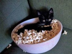 You enjoy the movie and I will enjoy your popcorn ;)