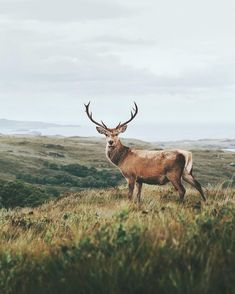 """About Scottish wildlife: so far we have met handful of deer, few hawks and about trillion midges,…"" Nature Animals, Animals And Pets, Cute Animals, Forest Animals, Wild Animals, Baby Animals, Wildlife Photography, Animal Photography, Beautiful Creatures"