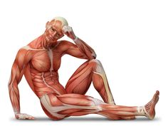 This will be one of your go to cheat sheets! Trust us! Request info about our upcoming, NCCA-Accredited Personal Trainer Certification Course now on our blog! http://bodydesignuniversity.com/muscles-and-their-actions-on-the-body/