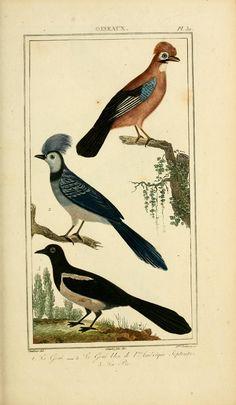 Oeuvres completes de Buffon. Oiseaux. Atlas.  By Buffon, Georges Louis Leclerc, comte de, 1707-1788  Genre Book  Publication info Paris,1841.  http://biodiversitylibrary.org/bibliography/53421#/summary