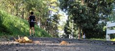 Raul Patrick Concepcion running on a trail.