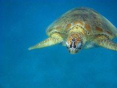 Turtles in the Perhentian Islands