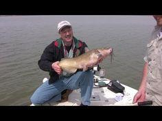 8 Best Catfish Baits Catch Catfish Blue Flathead And Channel Catfish Youtube Fishinh