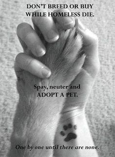 I think I want a paw print tattoo :)