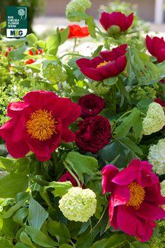 RHS Chelsea Flower Show - Fresh Garden - Flora Gucci Sarah Eberle