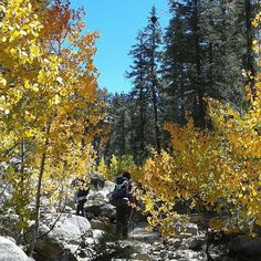 El Parque Nacional Sierra de San Pedro Martir alberga una admirable riqueza biológica debido a que cuenta con bosques de pino, abeto, ciprés y bosques mixtos de coníferas, el clima suele ser frío pero las vistas que observaras son impresionantes! ¿Estás listo para una nueva experiencia en #Ensenada? Aventura por gapc68