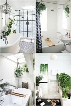 """Everyone on Pinterest is obsessed with these """"shower plants."""" Read more here: http://wmdy.us/aqEcE6R #lovelylady  #simplylovelylady  #ladyaccessary  #ladyscarf"""