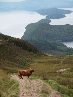 Scotland is so beautiful! I can't wait to see my favorite animal again... the Highland Coo! They are so cute and hairy.