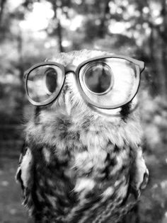 Owls wearing glasses might be one of the best things ever.