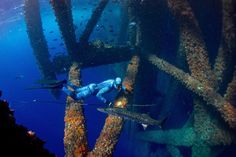 The oil rig is a magnet for fish
