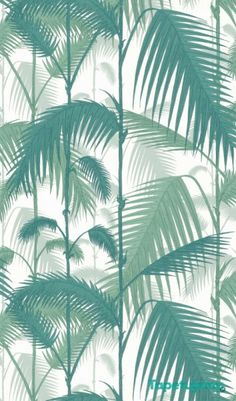 Tapeta Cole & Son - Contemporary Restyled  - Palm Jungle - 95/1002