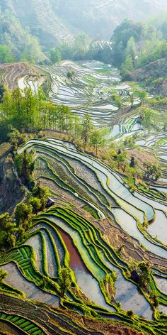 """Yuan Yang Rice Terraces - """"Tiger Mouth"""" under the sunset in yunnan province of China. 