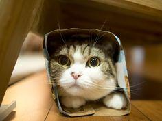 Maru in a Box