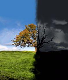 treecropped.jpg (1271×1500)